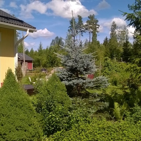 Jennis Alltid halvfärdig trädgård