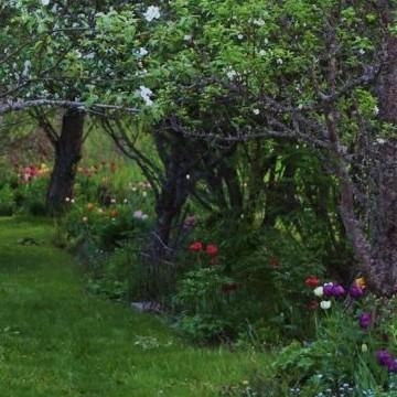 Karinin puutarha