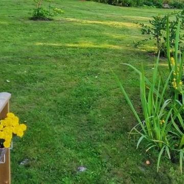 Putulan puutarha