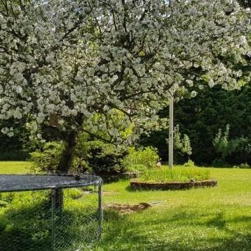 Trädgårdsvision Ruohola
