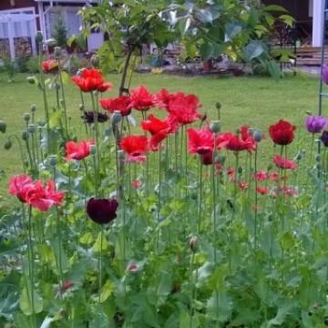 Sananjalan puutarha
