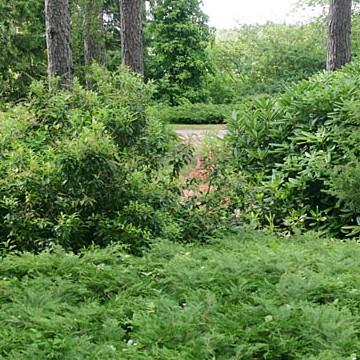 Ilolan arboretum ja taimisto