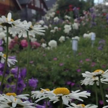 Kenkävero trädgård