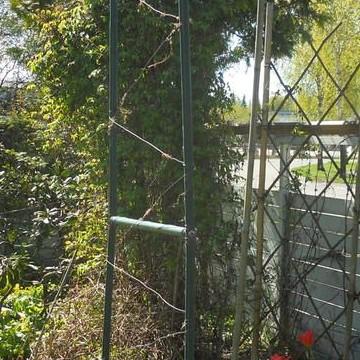 Marjaanas trädgård