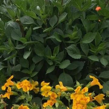 Lepolan puutarha