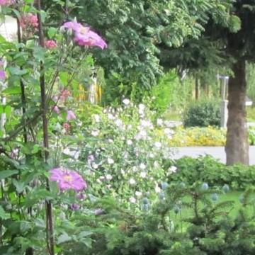 Katila trädgård