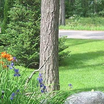 Bepita Kaunistos trädgård