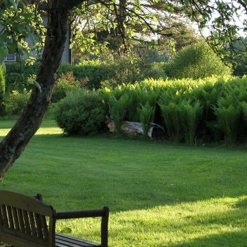 Millas trädgård