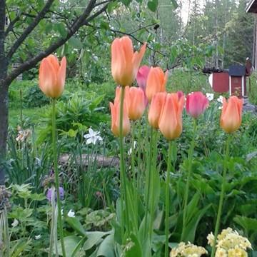 Marjaanan Kukka- ja Eläinpiha