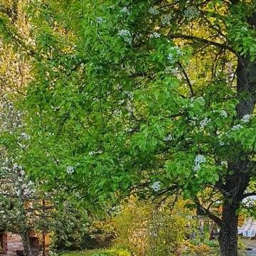 Ullan ja Jussin puutarha