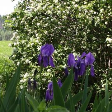 Änkilänsalon puutarha