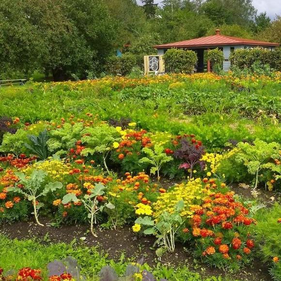 Gumtäkts skolträdgård