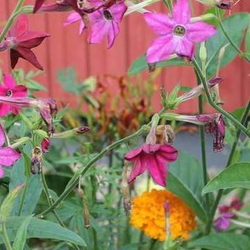 Lean puutarha