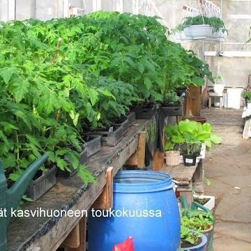 Tuomisens örtagård