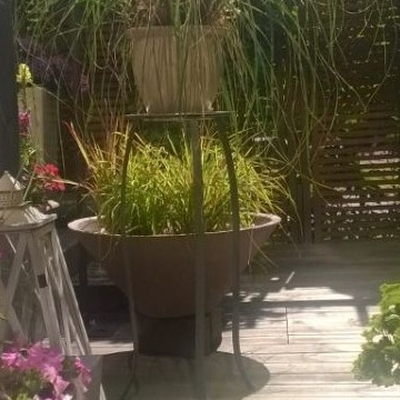 Jarmon puutarha
