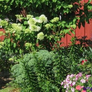 maijan puutarha