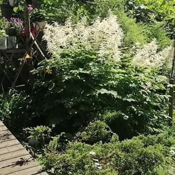 Päivärinteen puutarha, Salo