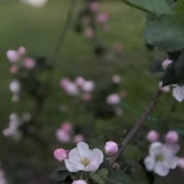 Mattilan puutarha