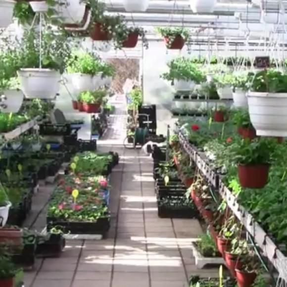 Alenius Trädgård