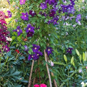 Nekun puutarha