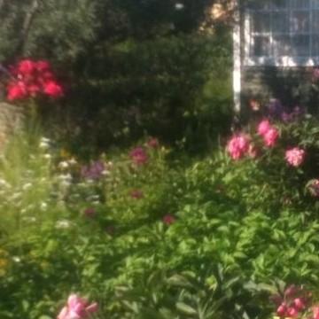 Kuppis koloniträdgård