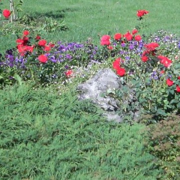 Hannelen puutarha