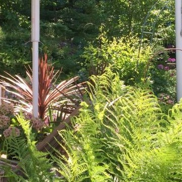 Seijas hemliga trädgård