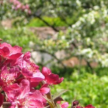 Äppelblomsparken
