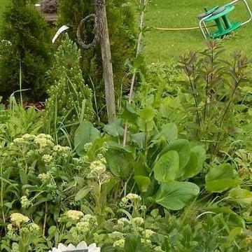 Ellis och Pärres trädgård