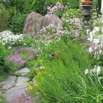 Timon puutarha