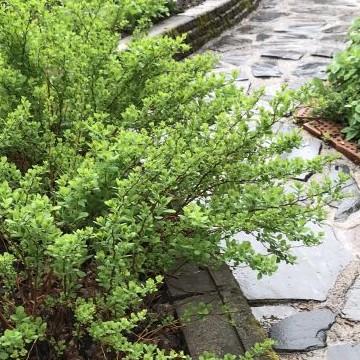 Green Caring, Vihreää Huolenpitoa