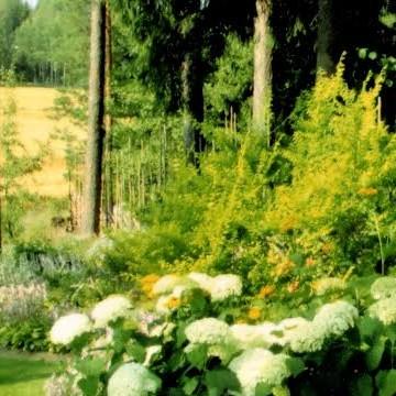 Paulan ja Arton puutarha