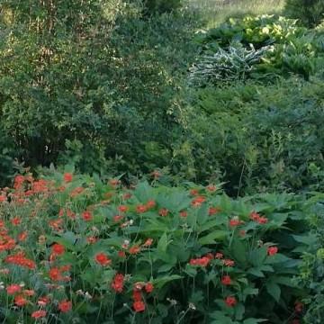 Sorjan ja Markun puutarha