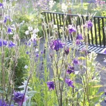 Westers Trädgård