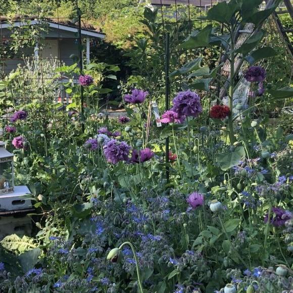 Mehiläistarhurin puutarha