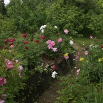 Trädgård för 6 sinnen