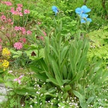 Sonja Isakssonin puutarha