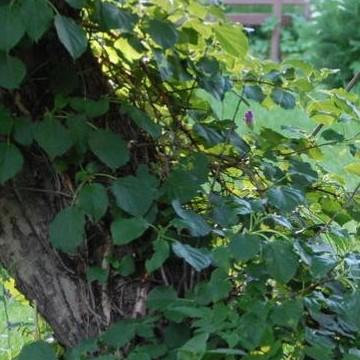 Katis trädgård
