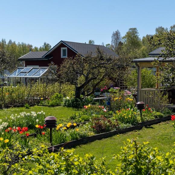 Marjaniemi gruppträdgård