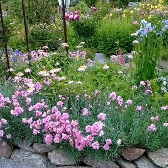 Carolan puutarha