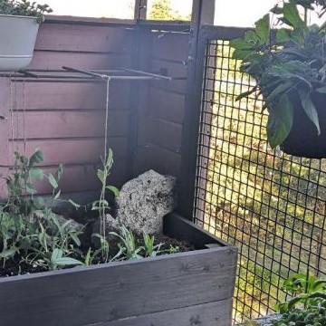 Mossbo: den lilla balkongen