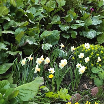 Mimmis trädgård