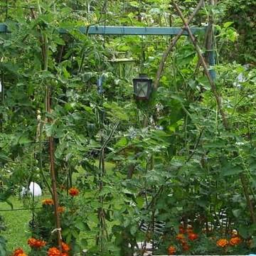 Den vilda trädgården i Britas