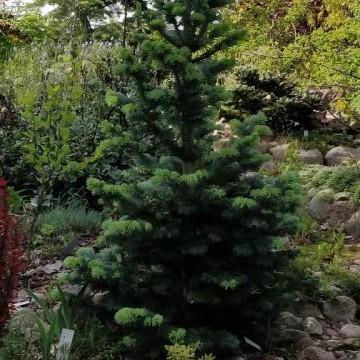 Mirja ja Markku Salmisen puutarha