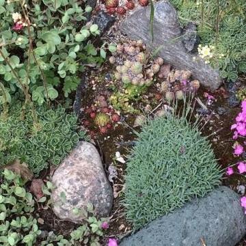 Suolammen puutarha