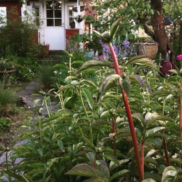 Brunakärr koloniträdgårdsförening rf