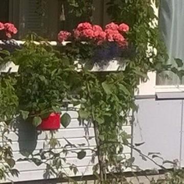 Kerrostalopuutahra (Trädgården till ett höghus)