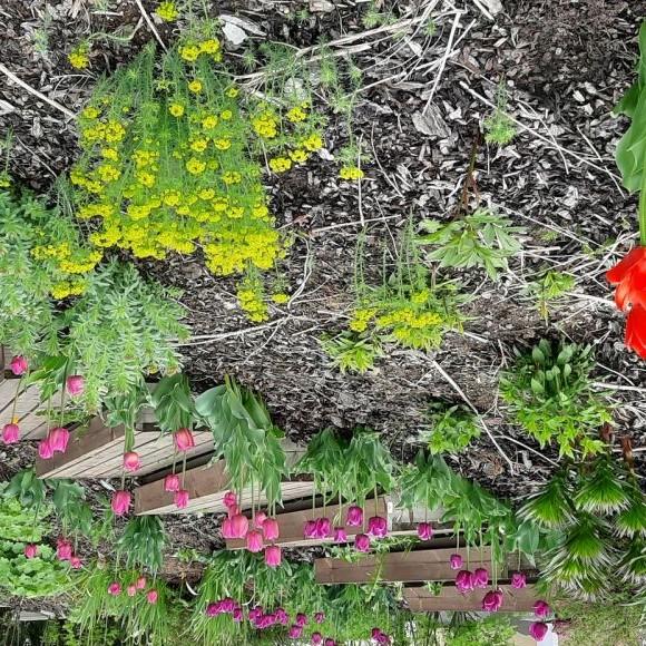 Miinankujan puutarha
