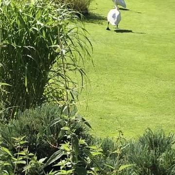 Maijas och Taistos trädgård