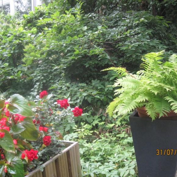 Mannisen puutarha